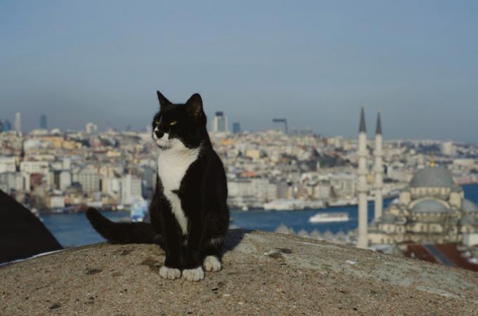 şehirnotları-istanbul